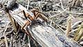 Spider 6.jpg