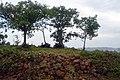 Spire Memorial -Mpumudde hill 4.jpg