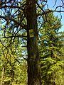 Spokane, WA, USA - panoramio (6).jpg