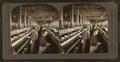 Spooning Yarn, Dallas Cotton Mills, Dallas, Texas, U.S.A., by Singley, B. L. (Benjamin Lloyd).png