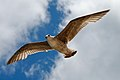 Spread your wings and fly away (2548594667).jpg