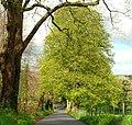 Spring, Minnowburn near Belfast - geograph.org.uk - 1275347.jpg