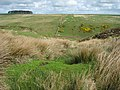 Spring and cleugh - geograph.org.uk - 413583.jpg