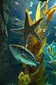 Starfish and fish @ Oceanário de Lisboa.jpg