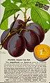 Stark fruits (1896) (20550876571).jpg