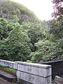 Starr-090623-1750-Aleurites moluccana-habit 1947 bridge and steep cliffs-Hana-Maui (24599666079).jpg