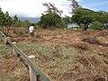 Starr-110328-3401-Thespesia populnea-scoured area after tsunami with Kim-Kanaha Beach-Maui (25053782386).jpg