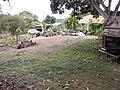Starr-120608-7326-Brassica oleracea-garden-Ulupalakua Ranch-Maui (24514649584).jpg