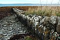 Stone dyke, Point of Backaquoy - geograph.org.uk - 2103452.jpg