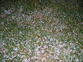 Sudden freak hail storm.JPG