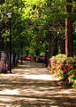 Sumter, South Carolina, USA. A walkway at The Iris Gardens 100418-F-8430J-003.JPG