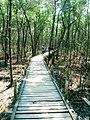 Sundarbans footbridge.jpg