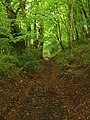 Sunken Track through Beech Woodland - geograph.org.uk - 427273.jpg