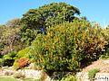 Sydney Royal Botanic Gardens (02).jpg