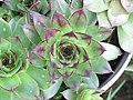 Symmetrical plant (17357523212).jpg