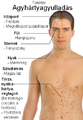 Symptoms of Meningitis-hu.png