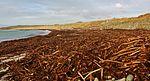 Tangled Beach IMG 3716 (12386225853).jpg