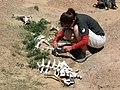 Taphonomy of eland.jpg