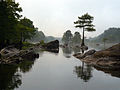 Taxodium distichum Lower Mt Fork River Oklahoma 1.jpg
