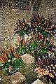 Temps de flors-baños arabes-girona-2013 (4).JPG