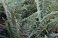 Terra Botanica 2017.08.23 Angers 113.jpg