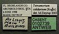 Tetramorium caldarium casent0102739 label 1.jpg