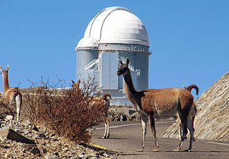 Guanaco - Image: The Guanacos of Atacama