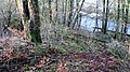 The Lambroughton Woods, North Ayrshire, Scotland.jpg