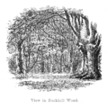 The New Forest its history and its scenery - page 276.png