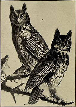 The Oölogist for the student of birds, their nests and eggs (1917) (14565951667)