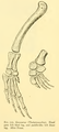 The Osteology of the Reptiles-201 ijuhgv drty.png