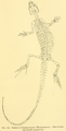 The Osteology of the Reptiles-281 ert.png