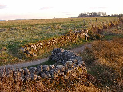 The Well of the Dead; modern remains of the park wall on Jacobite right The Well of the Dead, Culloden Moor - geograph.org.uk - 494157.jpg