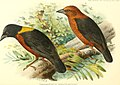 The birds of Africa, comprising all the species which occur in the Ethiopian region (1896) (14562376137).jpg
