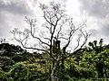 The tree near the top (8061048270).jpg