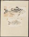 Therapon servus - - Print - Iconographia Zoologica - Special Collections University of Amsterdam - UBA01 IZ13000102.tif