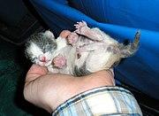 Three-hour-old-kitten