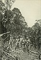 Through Central Borneo; an account of two years' travel in the land of the head-hunters between the years 1913 and 1917 (1920) (14590079070).jpg