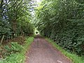 Through the trees on Fardens Road - geograph.org.uk - 32267.jpg