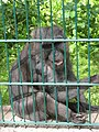 Tierpark Gotha 6.jpg