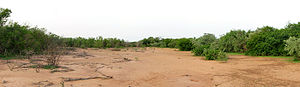 Tiger bush - Panoramic view taken from the middle of a bare band in a tiger bush plateau near Batama-Béri, Niger. Altitude decrease from left to right (slope is about one percent).