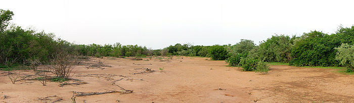 Panoramic view taken from the middle of a bare band in a tiger bush plateau near Batama-Beri, Niger. Altitude decrease from left to right (slope is about one percent). Tiger bush niger.jpg
