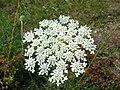 Tinyflowers5.jpg