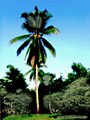 Tree of Life (Coconut) (3588346117).jpg