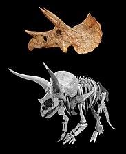 Triceratops-Yoshi-and-skull-v01.jpg