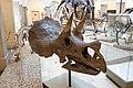 Triceratops horridus, Munich, 2017-09-11.jpg