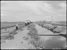 Tule Lake Relocation Center, Newell, California. This view shows an irrigation ditch which supplies . . . - NARA - 538378