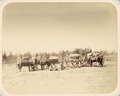 Turkestan Krai. Night Lodging Site for Caravans WDL11116.png