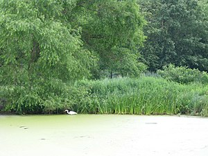 Great Lawn and Turtle Pond - Snowy egret in Turtle Pond