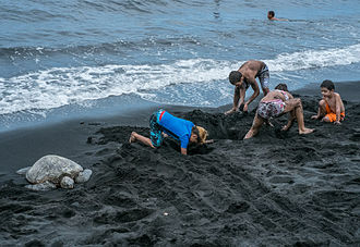 Punalu'u Beach - Image: Turtle and children on the beach at Punaluu